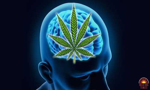 clear brain kosttillskott